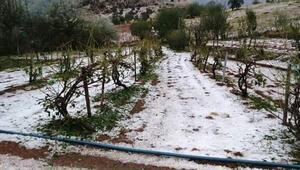 Erganinin 40 köyünü dolu vurdu üretici perişan