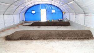 ABDden getirdiği 400 bin solucanla organik gübre üretiyor