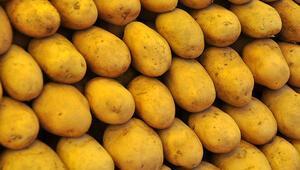 İlk olarak 1000 ton patates gitti