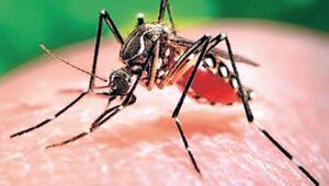 Zika avcısı sivrisinek