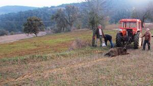 Kastamonuda ayının mezarından çıkardığı cenazeyi parçaladığı iddiası