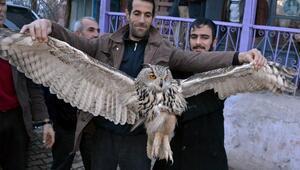 Yaralı puhu kuşuna köylüler sahip çıktı