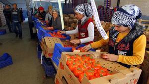 Dolara direnemeyen Ruble, Muğladaki ihracatı olumsuz etkiledi
