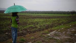 Kolinden Somaya 60 bin zeytin fidanı