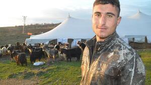 Renkli tiftik keçileri koruma altına alınıyor