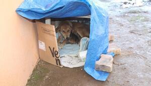 Bahçesine sığınan köpeklere elektrikli battaniye aldı