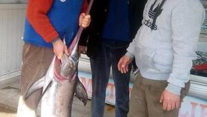 Saros Körfezinde oltayla kılıç balığı avlandı