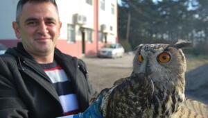 Tedavisi Yapılan Baykuşun Yeni Evi Samsun Hayvanat Bahçesi