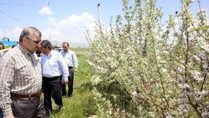 Büyükşehir'den Tarımsal Kalkınma Hamlesi