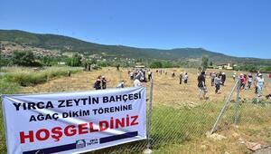 Foça'da, Zeytin Fidanları Toprakla Buluşturuldu