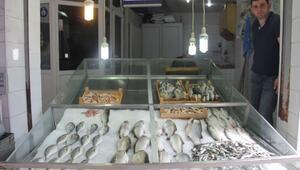 Balık Fiyatları Düştü, Satışlar Arttı