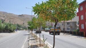 Hakkari'de Ağaçlar Göz Göre Göre Koruyor