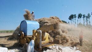 Sıcak Havada Çiftçinin Patoz Mesaisi