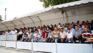 Sapanca'da Mahalli AT Yarışlarına Yoğun İlgi