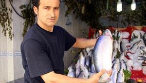 Samsunlu Balıkçıların Palamut Ve Hamsi Umudu