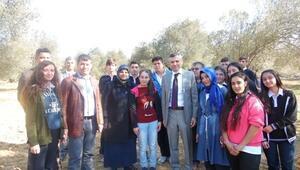 Gömeç'te Öğrenciler Zeytin Hasadı Yaptı