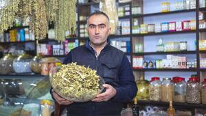 Ahlat'ta Ihlamur Satışları Arttı