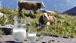 Ticari Süt İşletmelerince Kasım Ayında 676 Bin 704 Ton İnek Sütü Toplandı