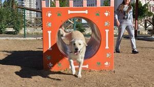 Konyaaltı Belediyesi Gürsu Köpek Oyun Parkı'nı Açtı
