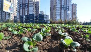 Belediye Park Ve Yeşil Alanlara 32 Milyon TL Yatırım Yaptı