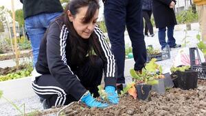 Sebze Yetiştiriciliğinde Yeni Dönem Şubat'ta Başlıyor