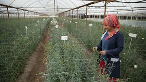 Kadın işçileri hayallerine çiçekler ulaştıracak