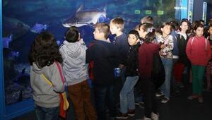 Öğrenciler nesli tükenmekte olan hayvanları öğrendiler