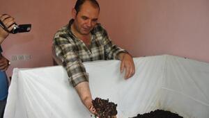 Asgari ücretle geçinemeyince, solucan gübresi üretiyor
