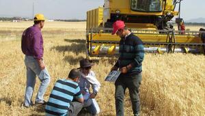 Buğday Hasat'ı rekolte düşüklüğüyle başladı