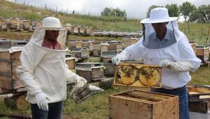Sivasta organik bal üretimi yaygınlaşıyor