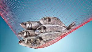 Balıkçılar tüm dalgaları aştı, su ürünleri üretimi yüzde 25 arttı