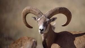 Bu hayvanları vurmanın cezası 75 bin TL