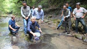 Zonguldak'ta, 4 bin alabalık dereye salındı