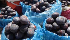 Bursadan Almanyaya incir ihracatı