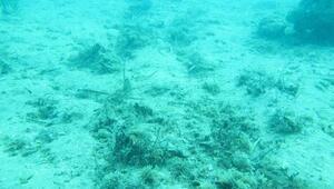 Akdenizin dibi çölleşiyor