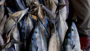 8 ayın balığı 10 günde tutuldu