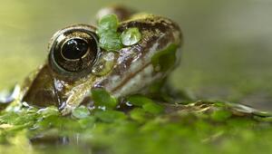 En şaşırtıcı vahşi doğa fotoğrafları