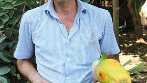 Alanyada 24 çeşit tropik meyve üretiliyor