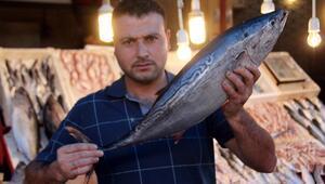 Balıkçıların ağına 8 kiloluk dev palamutlar takıldı