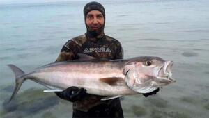Tüpsüz dalışta boyu büyüklüğünde balık avlıyor