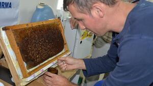 AGAM'ın ilk arı ürünleri satışa sunuldu