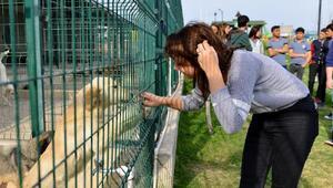 Hayvanlar için ödüllü yarışma
