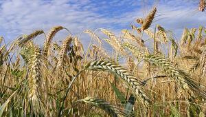 Adım adım milli tarım projesi