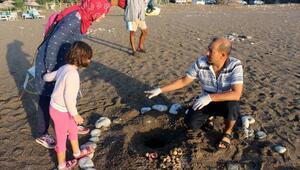 Kemerde 9 bin 610 yavru caretta denizle buluştu