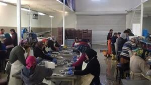 Fatsadan Almanya ve Hollandaya balık ihraç ediyor
