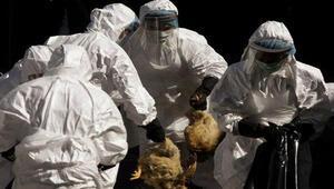 Japonya, Güney Kore, Hong Kong ve Bosna-Hersek, Almanya'dan kanatlı hayvan ithalatını durdurdu