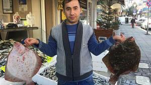 Kalkan balığının fiyatında artış yaşanıyor