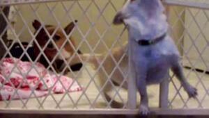 Köpeğin kapıyla imtihanı
