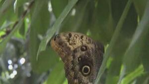 İşte Türkiyenin ilk kelebek çiftliği