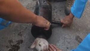 Taylandda boruya sıkışan köpek böyle kurtarıldı